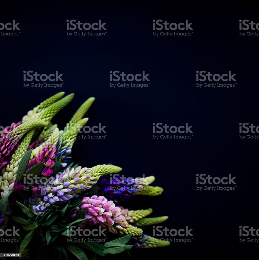Colorful Bouquet on a Black Background stock photo