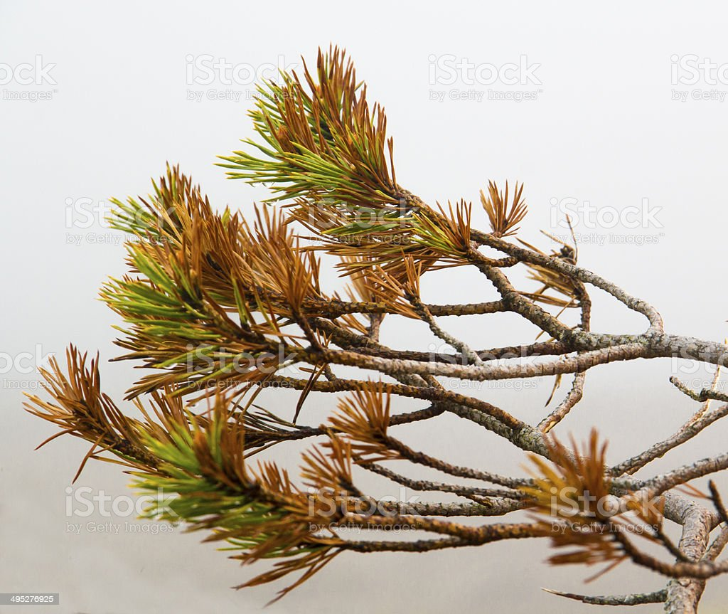 Colorful Branch stock photo