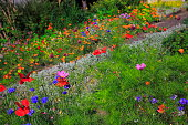 Colorful Bright wildflowers, foliage background, flowerbed detail at springtime
