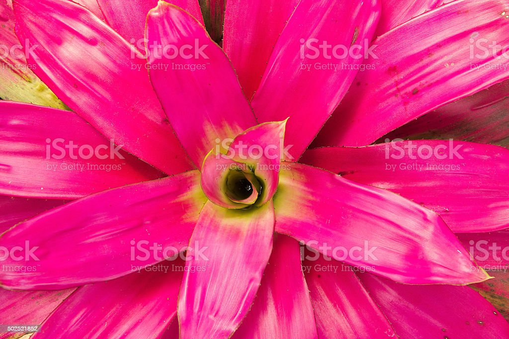 Colorful bromeliads stock photo