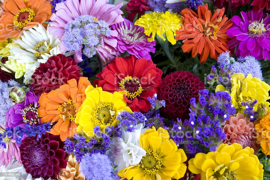 Colorful bunch of flowers and bees stock photo
