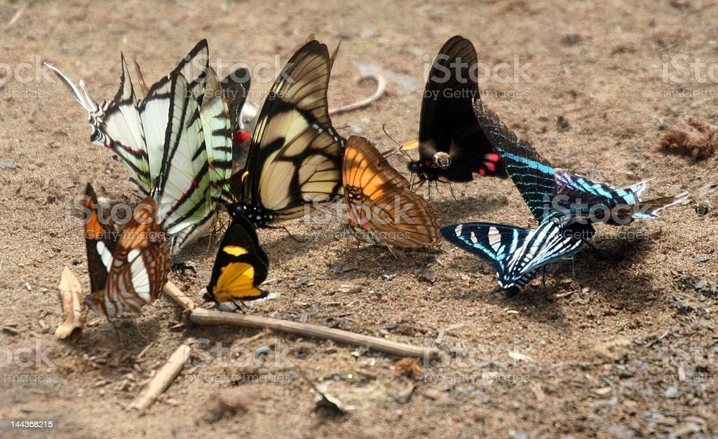 Colorful Butterflies royalty-free stock photo