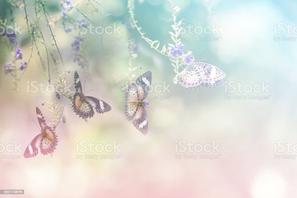 Colorful butterfly enjoy nectar stock photo