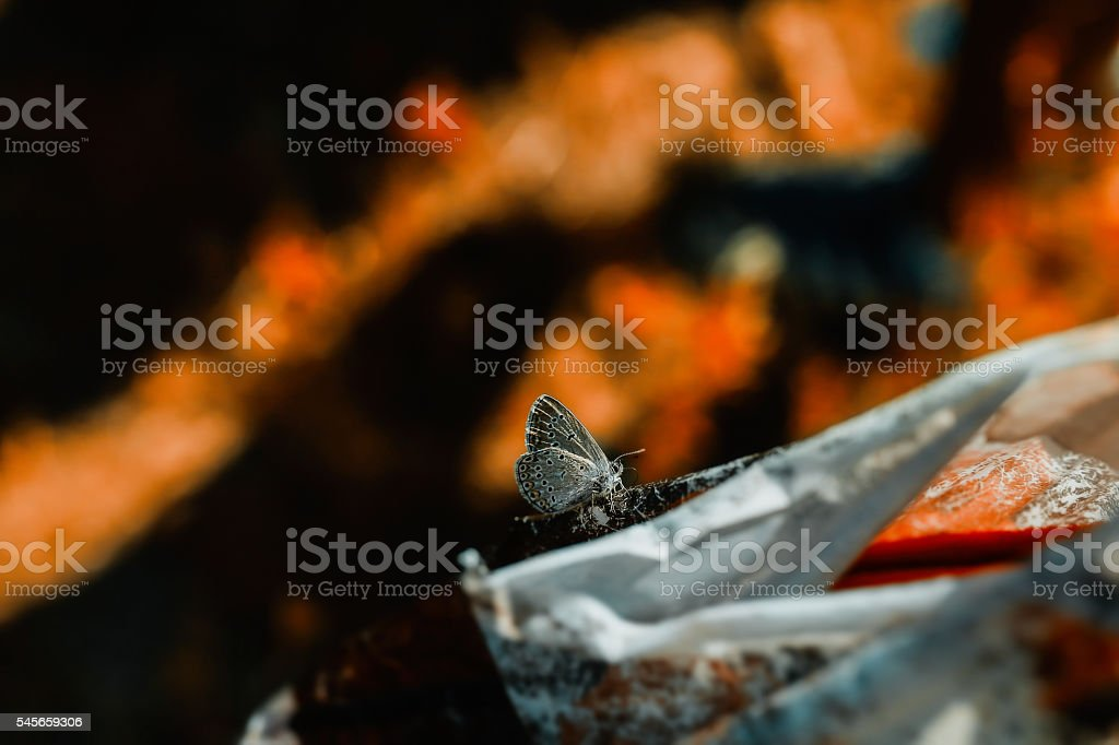 colorful butterfly macro stock photo