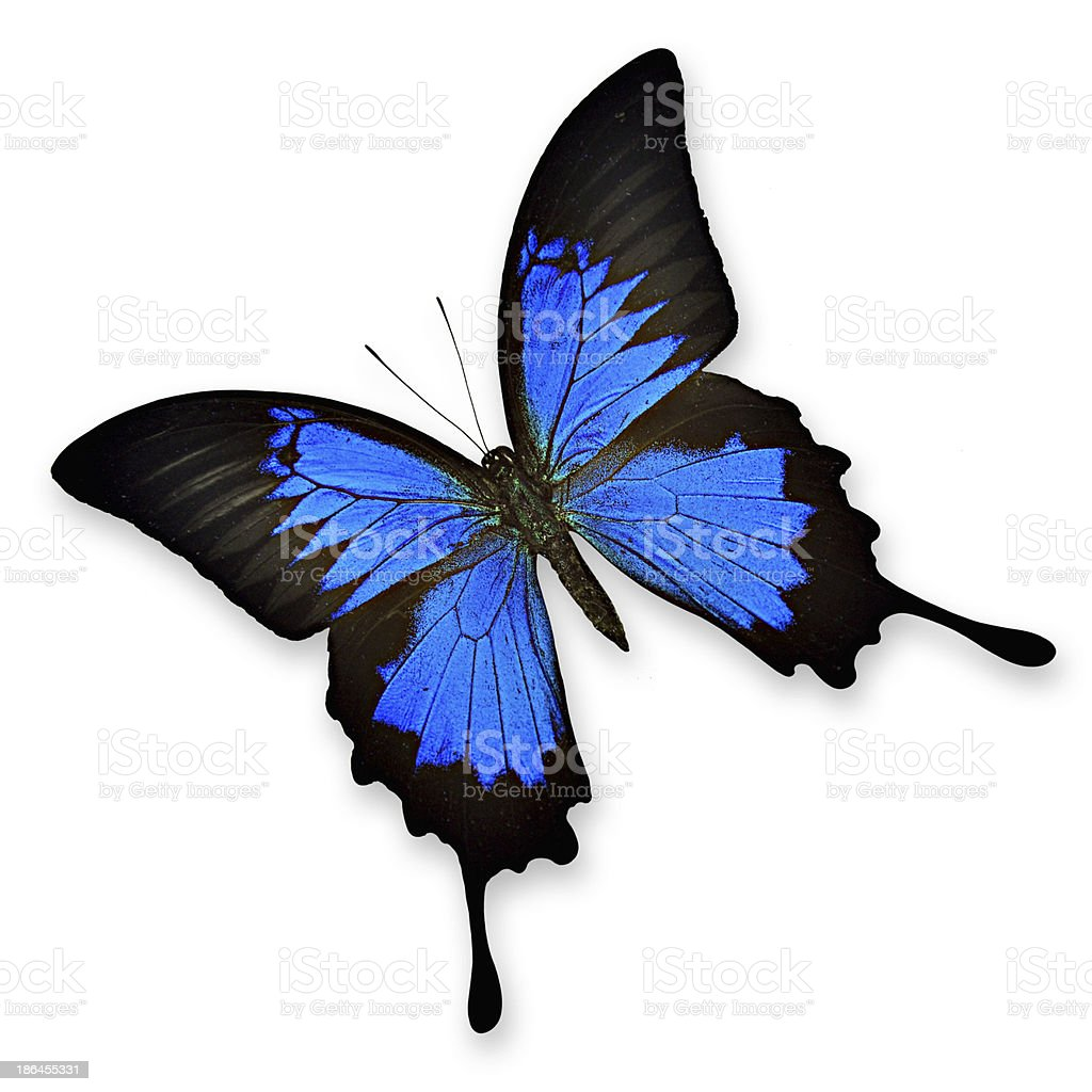 Colorful butterfly royalty-free stock photo