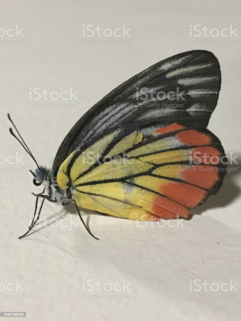 Colorful Butterfly. stock photo