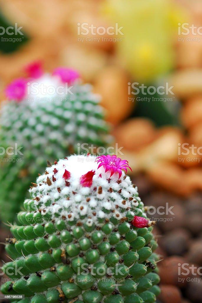 Kolorowe cactus zbiór zdjęć royalty-free