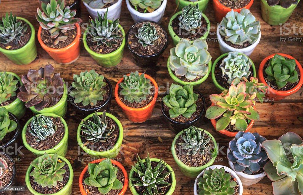 Colorful cactus stock photo