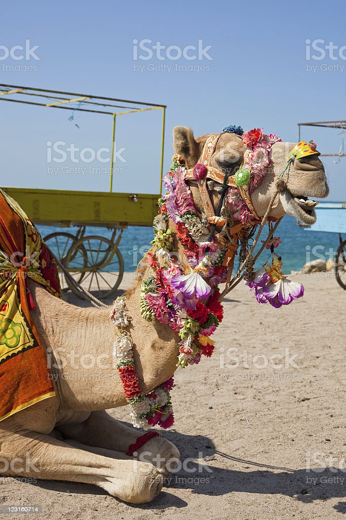 Colorful Camel On The Beach stock photo