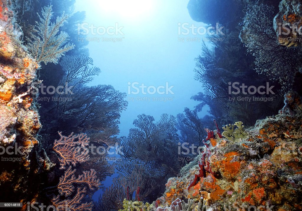Colorful Caribbean shallow reef stock photo