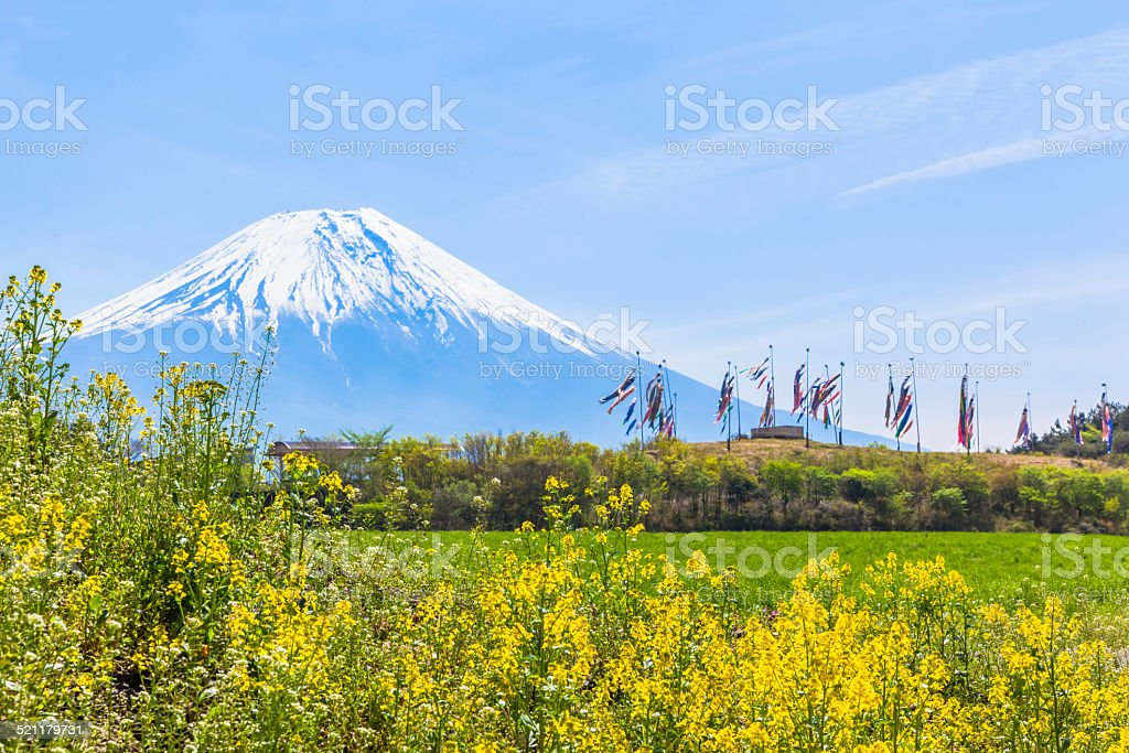 Colorful carp banners and Mount Fuji stock photo