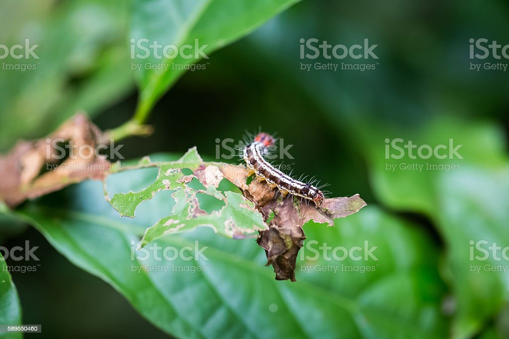 colorful caterpillar on leaf stock photo