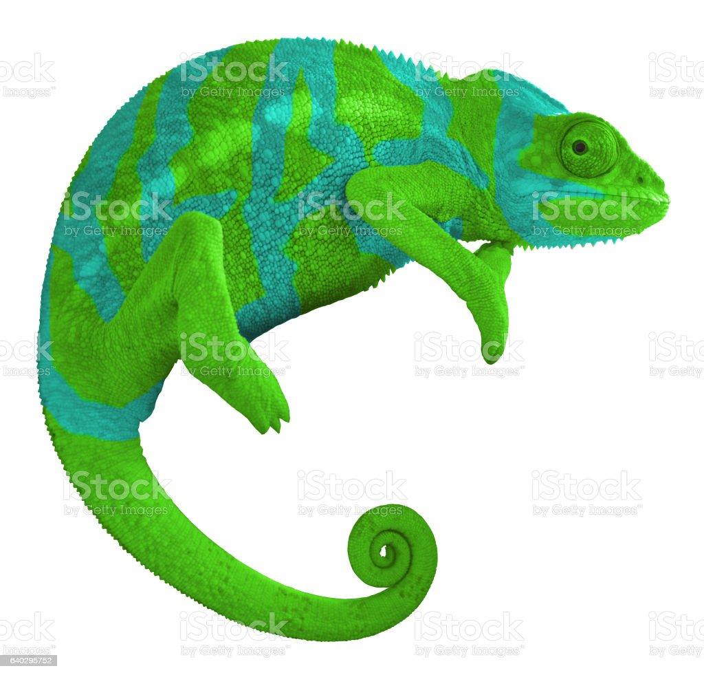 Colorful Chameleon stock photo