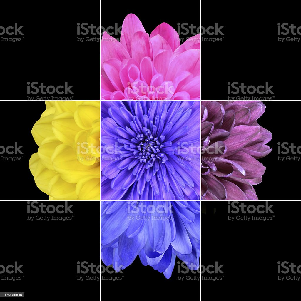 Colorful Chrysanthemum Flower Mosaic Design royalty-free stock photo