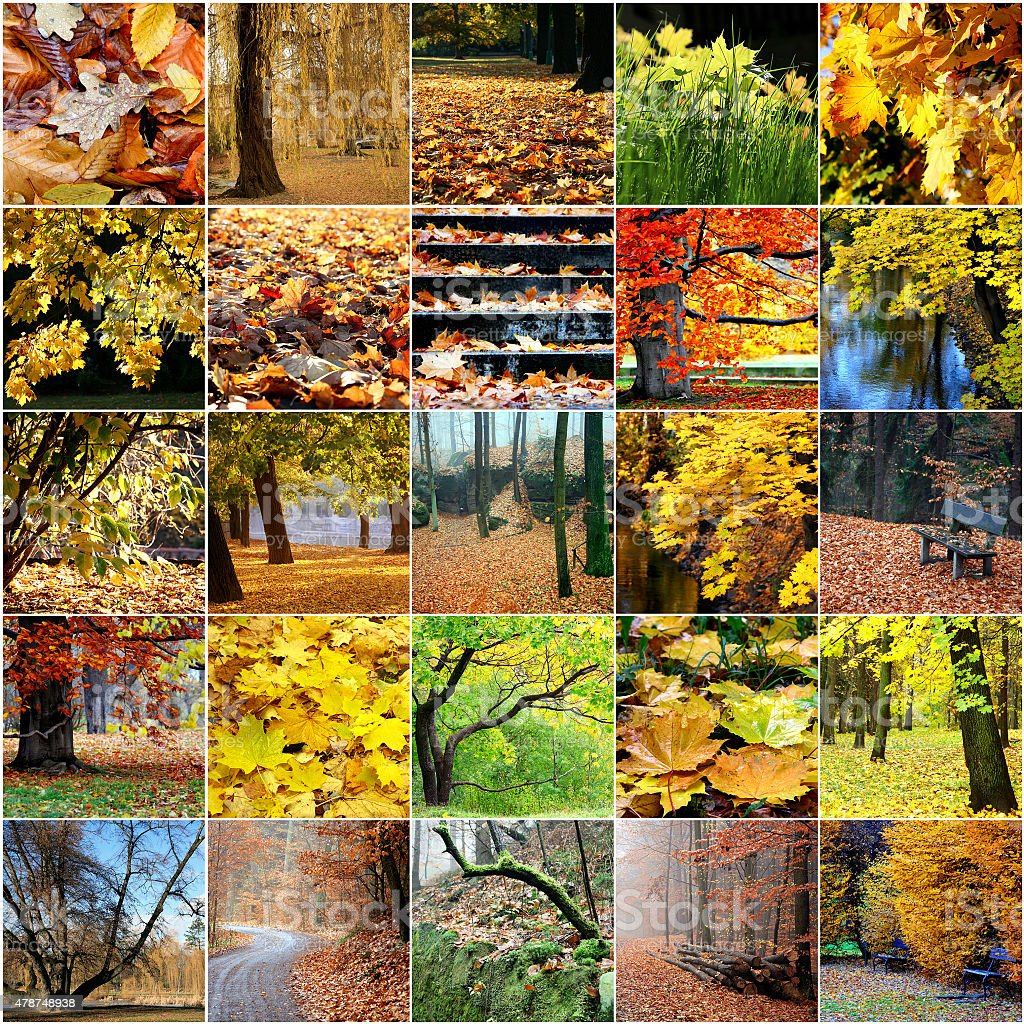 Colorful collage of autumn trees Leaves stock photo