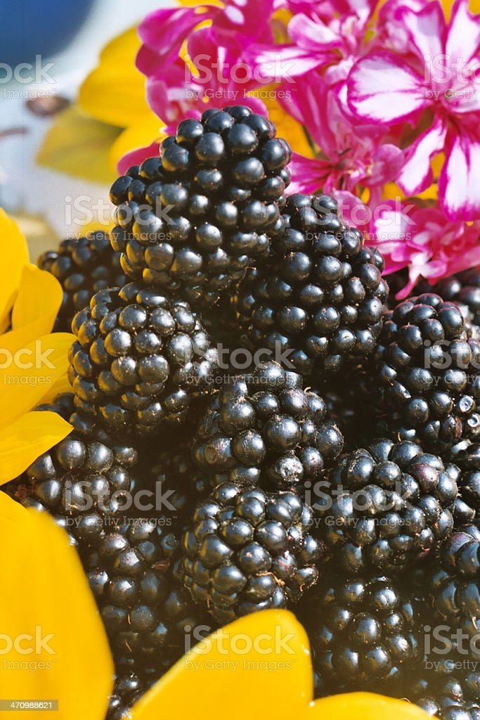 colorful combination I royalty-free stock photo