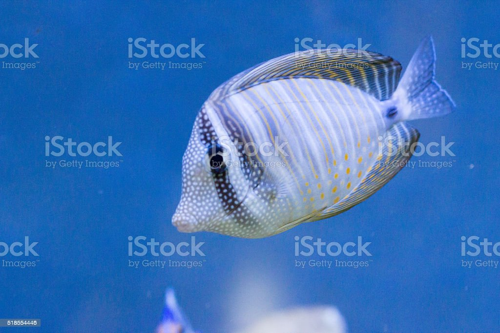 colorful coral fish under water stock photo