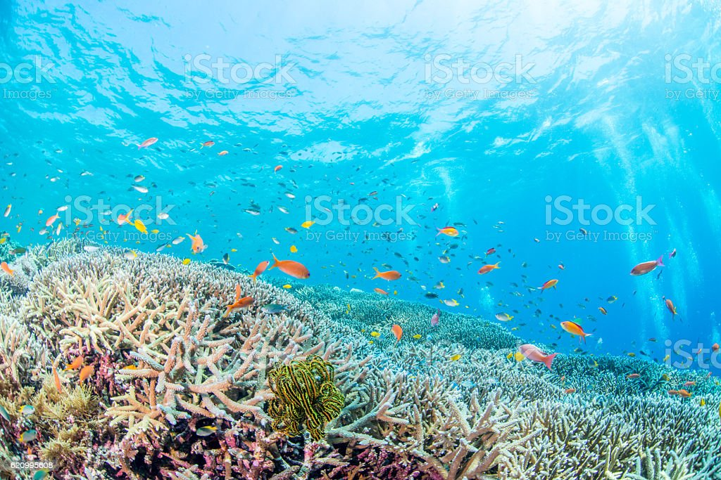 Colorful Coral stock photo