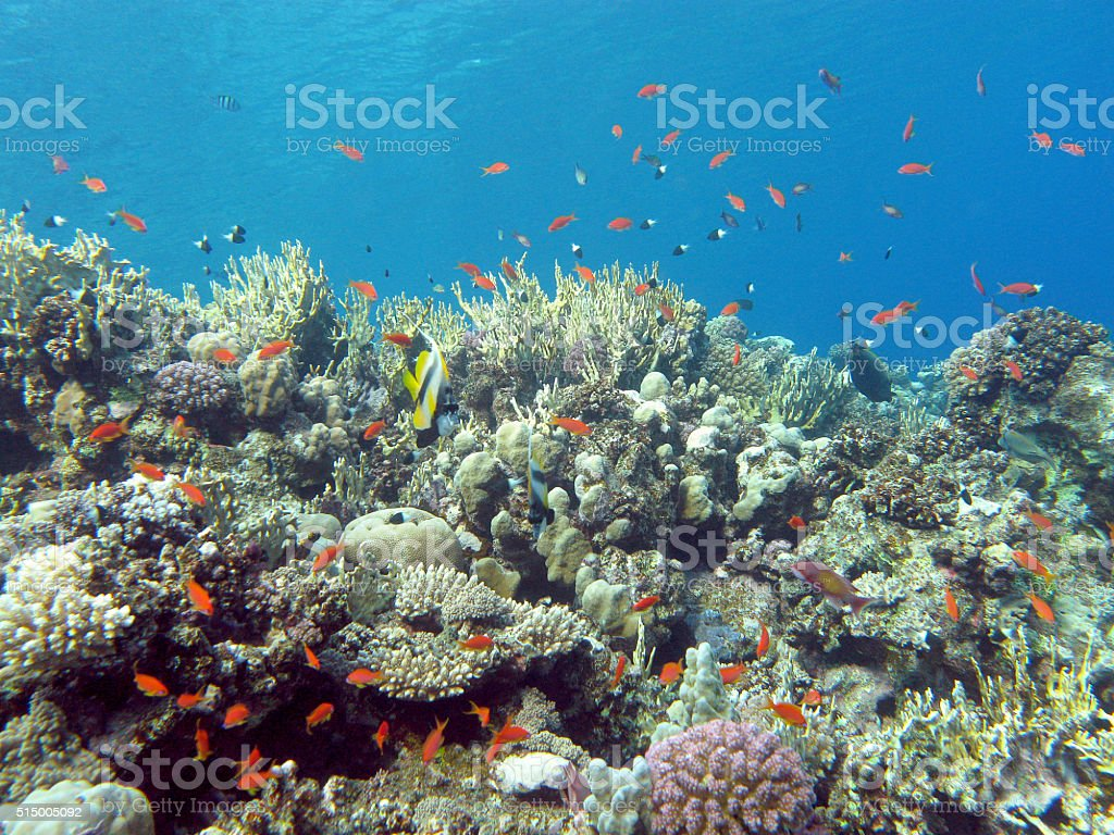 colorful coral reef in tropical sea, underwater stock photo