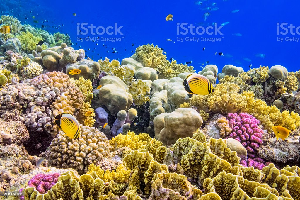Colorful Coral Reef on Red Sea nearby Marsa Alam stock photo