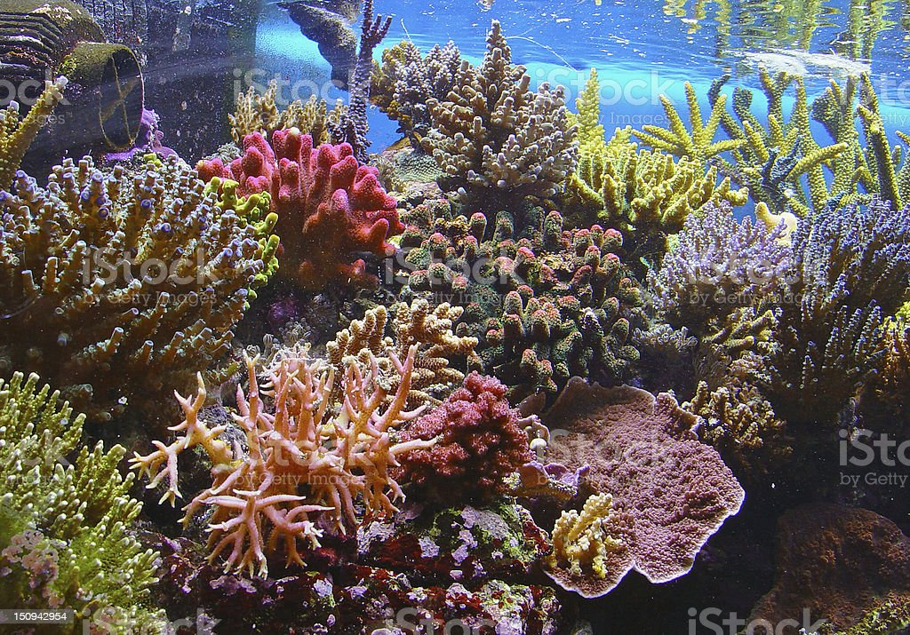 Colorful coral reef underwater stock photo