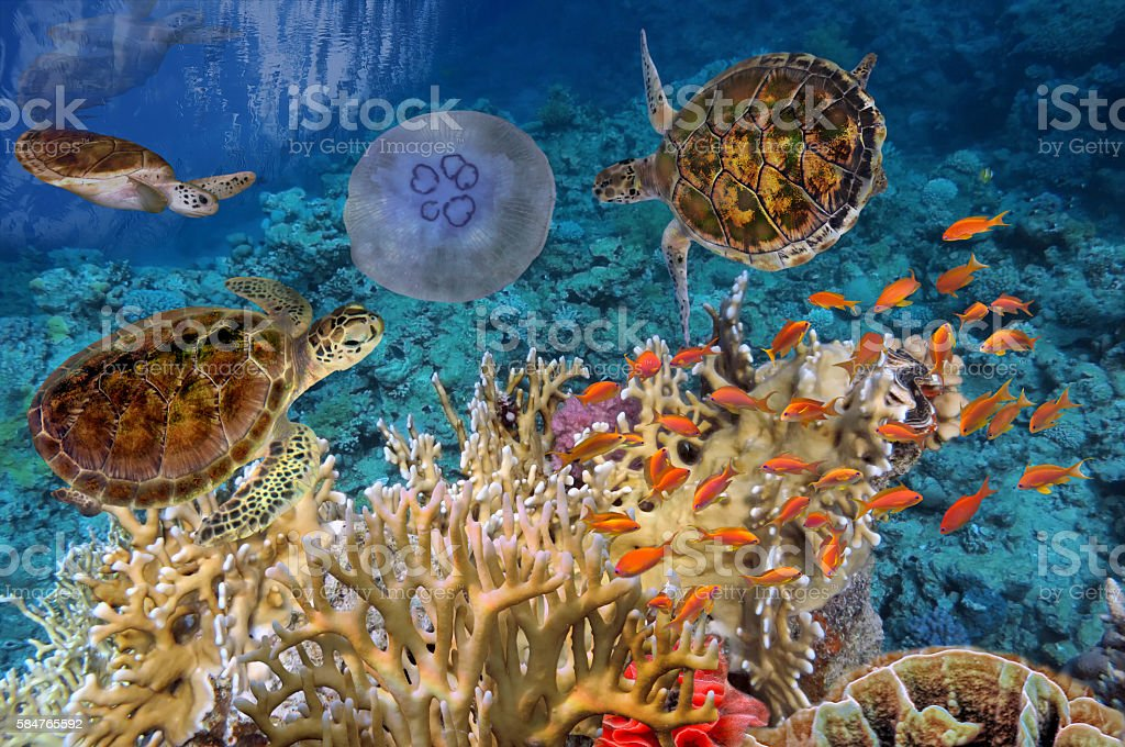 Colorful coral reef with many fishes and sea turtle stock photo