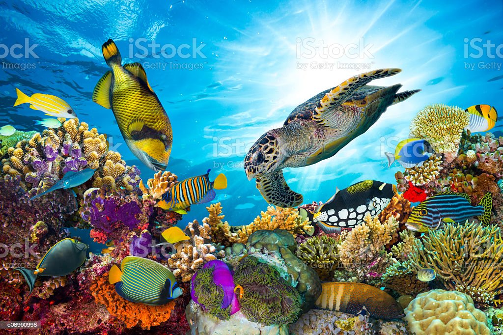 colorful coral reef with many fishes royalty-free stock photo