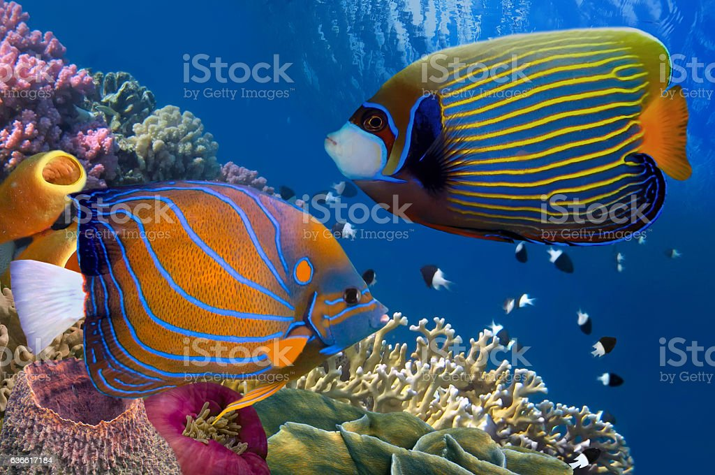 Colorful coral reef with many fishes stock photo