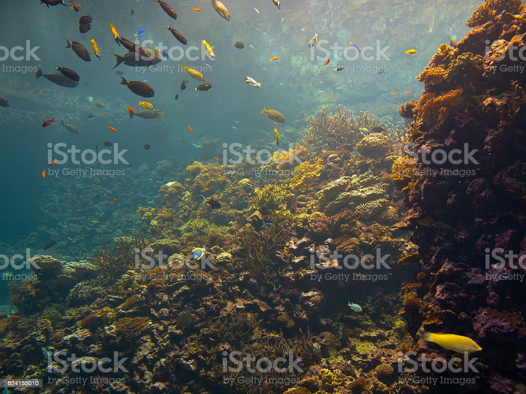 Colorful coral reef with tropical fish stock photo