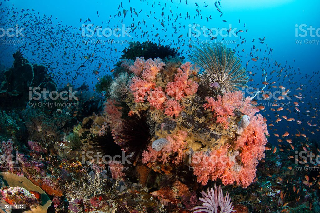 Colorful Coral Reef wtih Lots of Fish stock photo