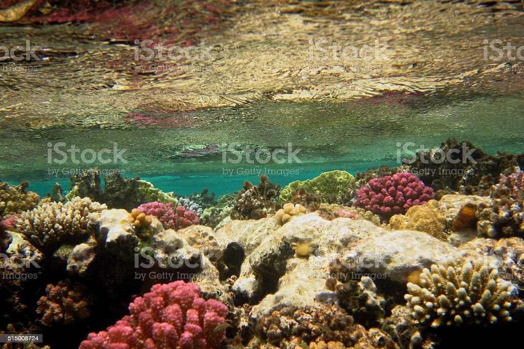 colorful coral water surface stock photo