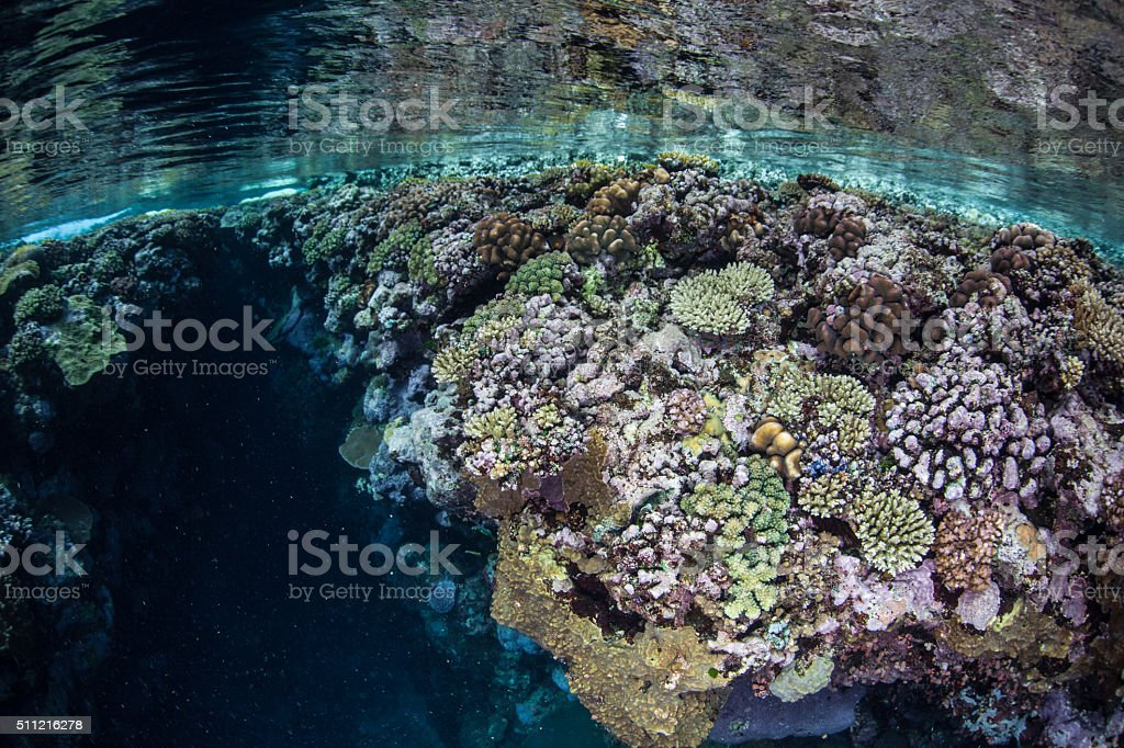 Colorful Corals in Shallows stock photo