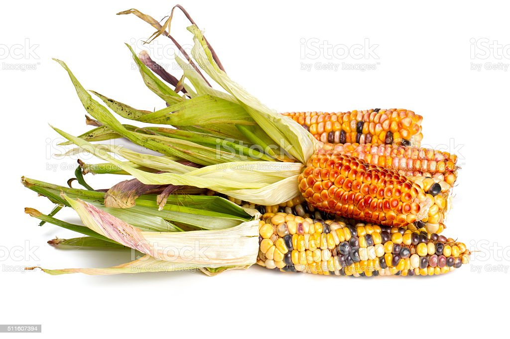 colorful corn cobs isolated on white stock photo