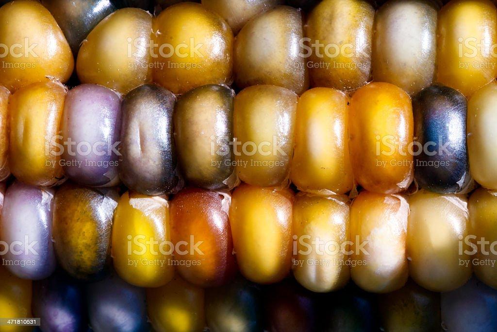 Colorato kernel mais foto stock royalty-free