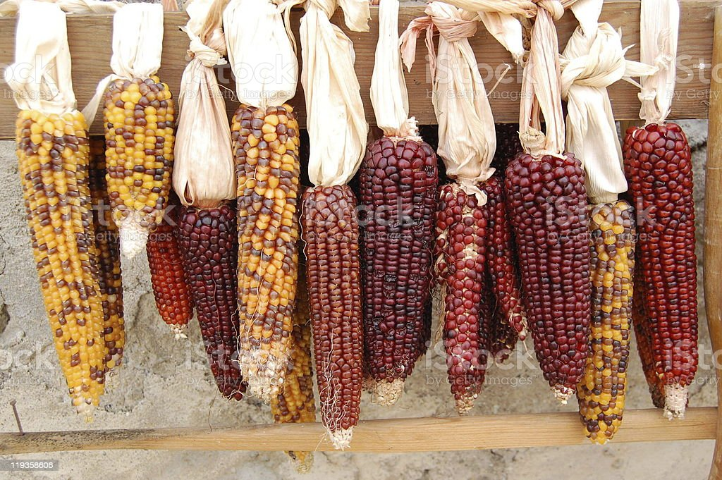 colorful corns royalty-free stock photo