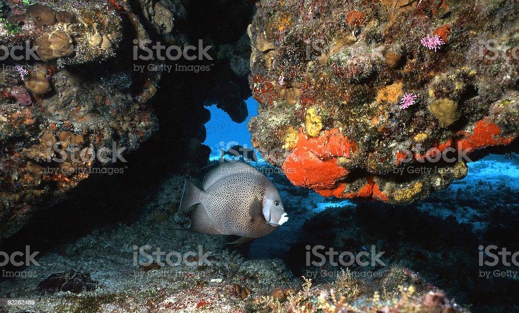 Récif coloré de Cozumel photo libre de droits