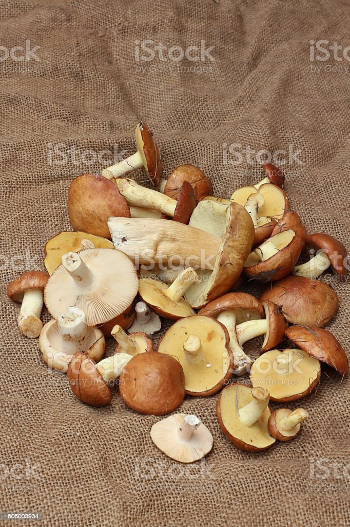 Colorful crop of forest mushrooms on the rough cloth stock photo