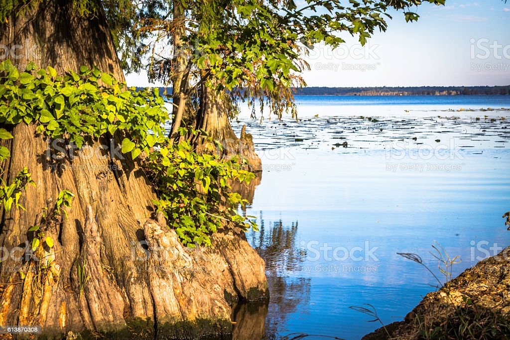 Colorful Cypress on Reelfoot Lake Samburg Tennessee stock photo