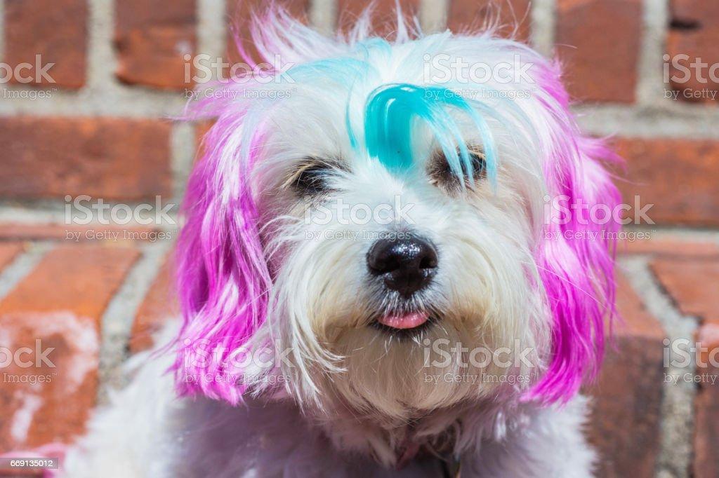 Colorful dog stock photo