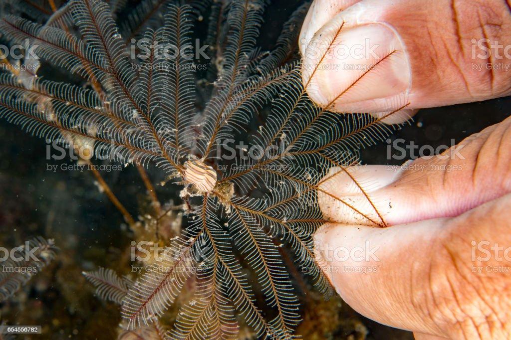 Colorful donut nudibranch close up macro detail stock photo