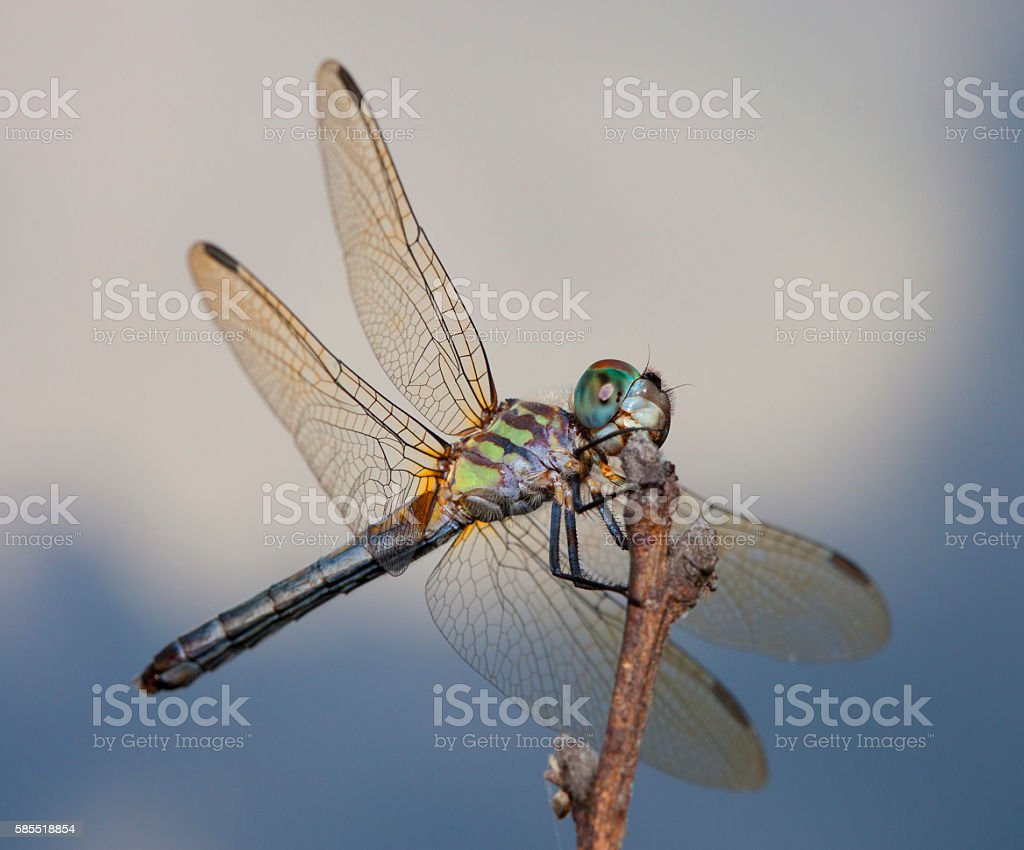 Colorful dragonfly stock photo