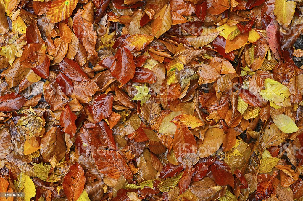 Colorful dry leaves royalty-free stock photo