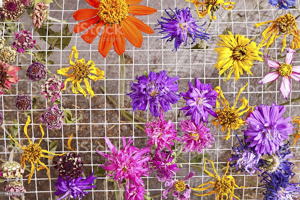 Colorful Drying Flowers royalty-free stock photo