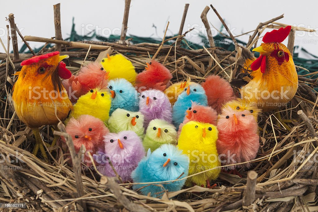 Colorful easter chickens royalty-free stock photo