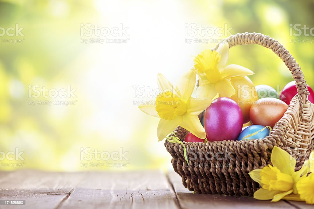 Colorful easter eggs and daffodils on green nature background stock photo
