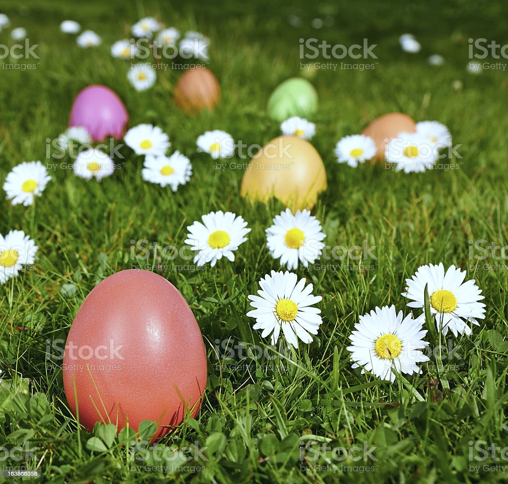 Colorful Easter eggs in a field royalty-free stock photo
