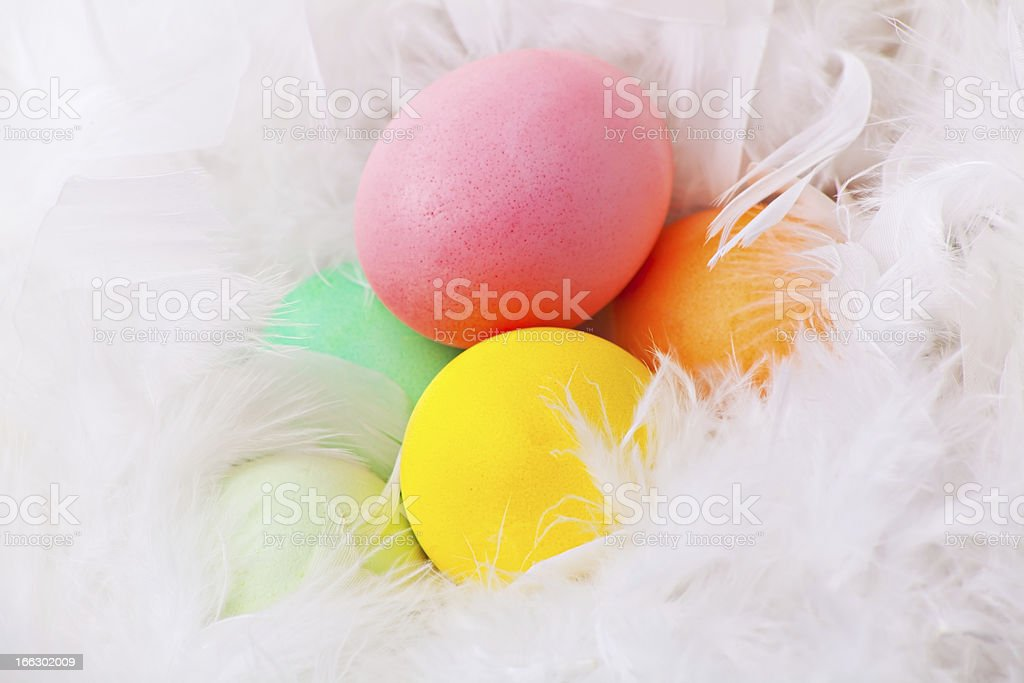 Colorful easter eggs in white feather royalty-free stock photo
