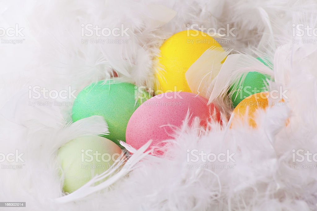 Colorful easter eggs in white feathers royalty-free stock photo