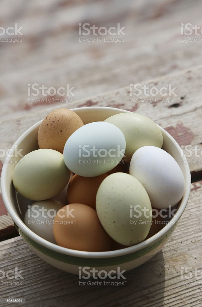 colorful eggs from the farm stock photo