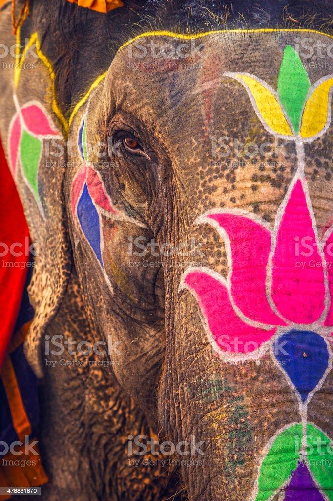 Colorful elephant, Jaipur stock photo